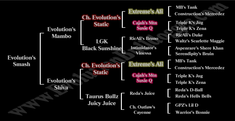 Evolution's Smash pedigree