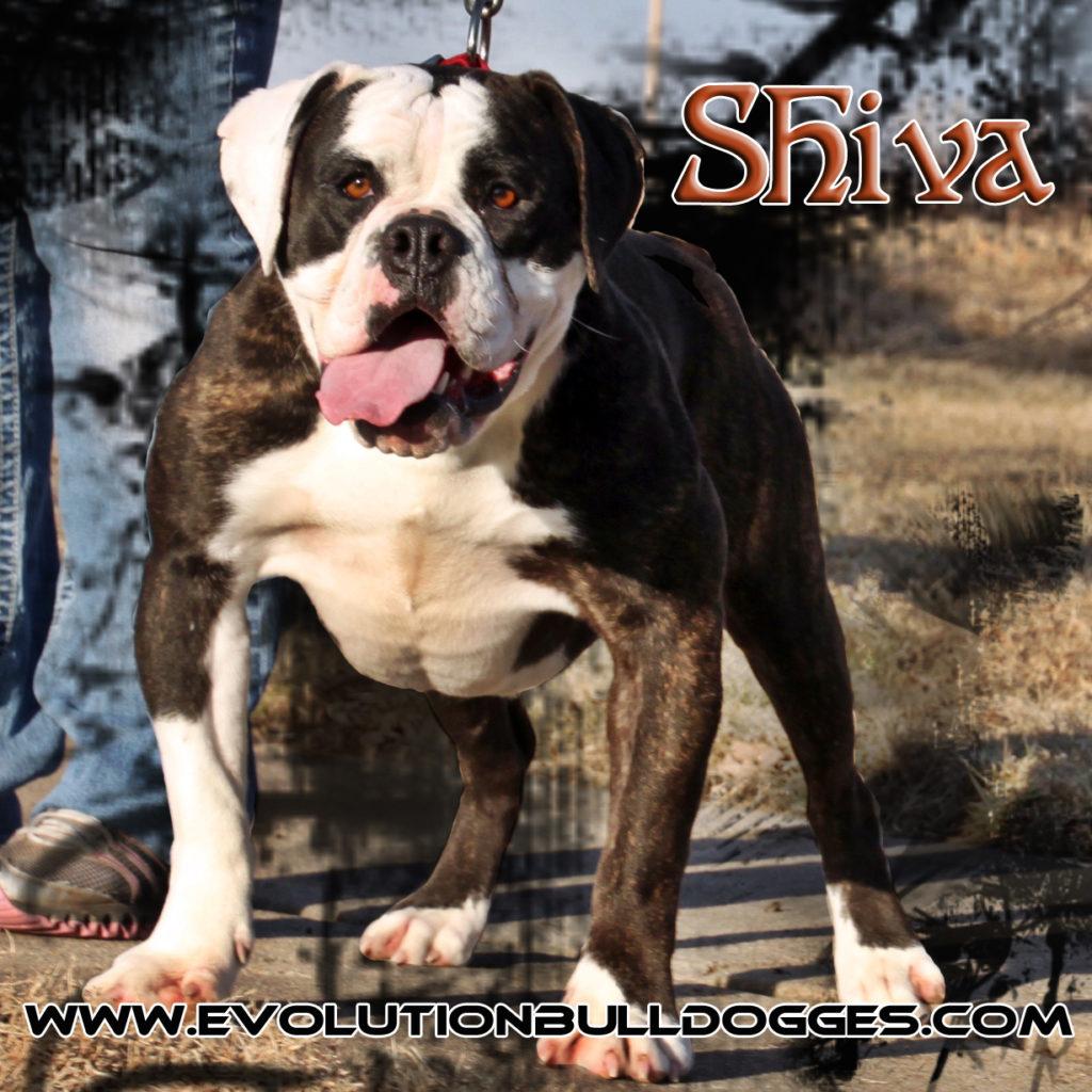 Evolution's Shiva