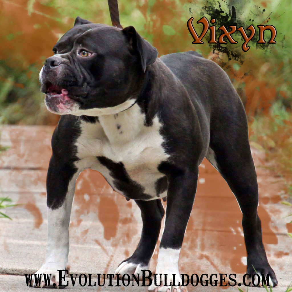 Evolution's Vixyn