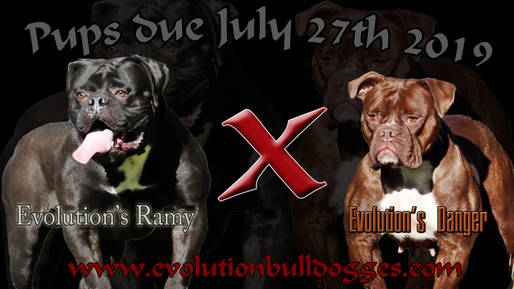 Bulldogge Breeding announcement